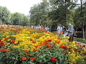 Blumenmeer auf der internationalen Gartenschau in Hamburg- Wilhelmsburg