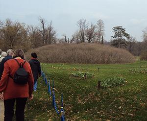 Kastanienbusch im Park Schloß Muskau
